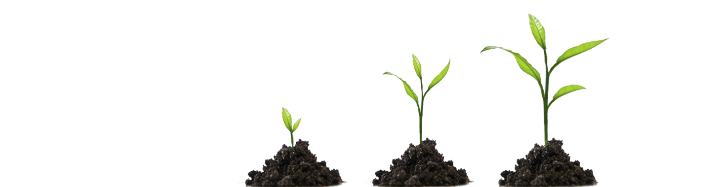 business-development-plant-grow-3